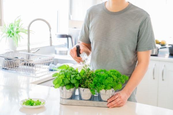 Greenery-in-Kitchen